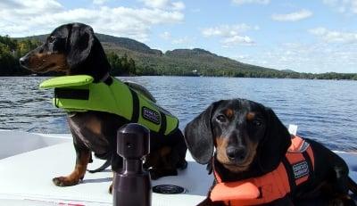 como viajar con perro en barco